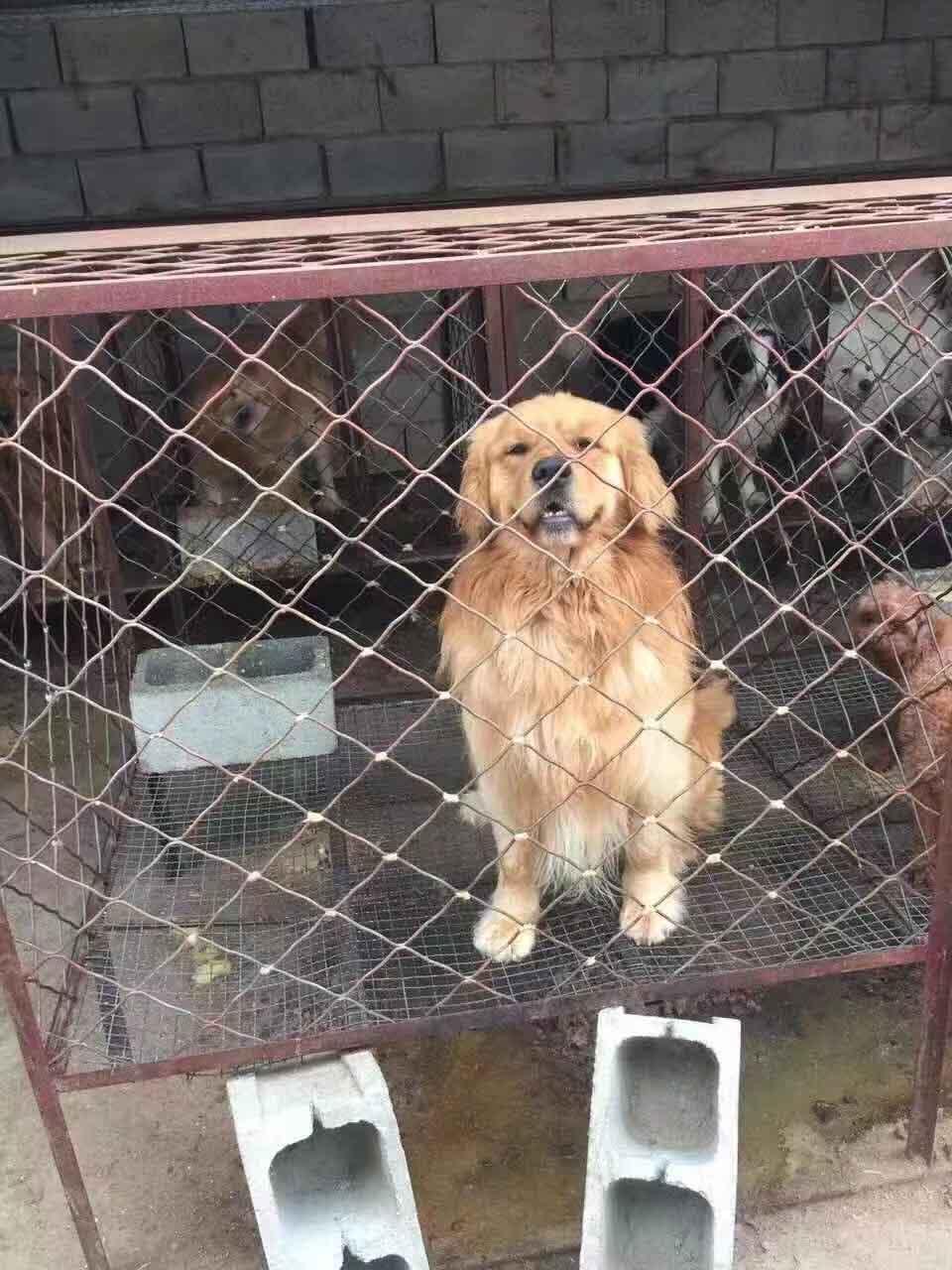 豬苗哪家好-優良的寵物狗就在莒南金帝養殖