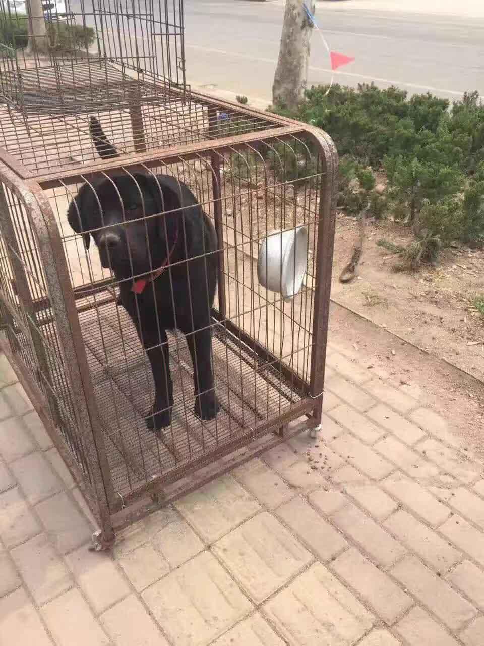 肉狗苗找哪家-劃算的寵物狗臨沂哪里有