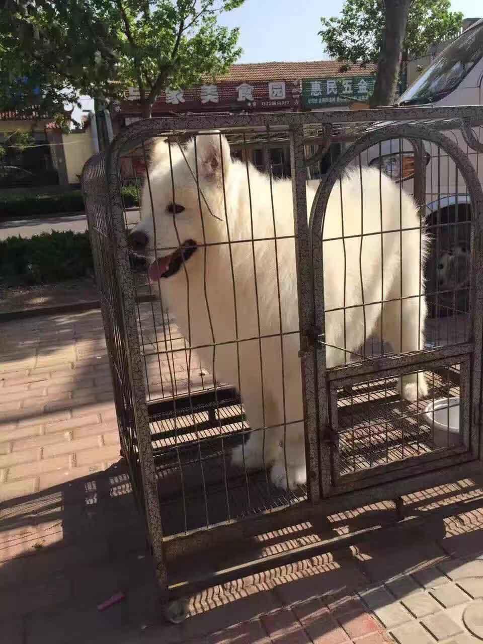 寵物狗廠家電話|莒南金帝養殖-好評率高的寵物狗經銷商