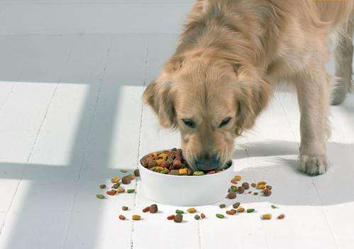 宠物狗哪家便宜-的狗粮厂家在山东