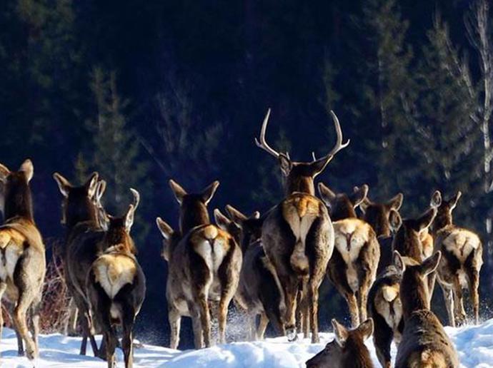 鹿——健康,美丽,爱情的护航者