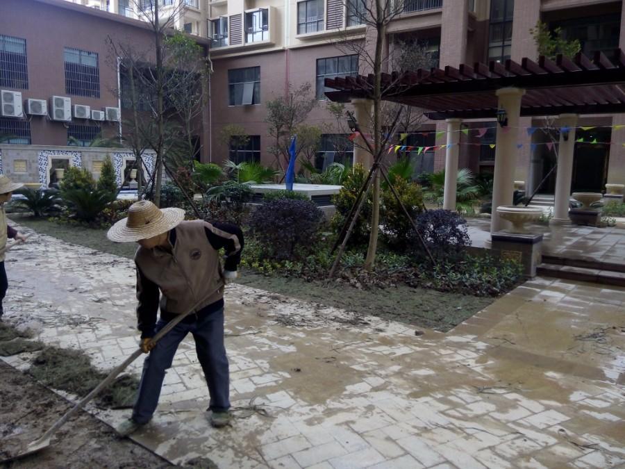 肇慶園林設計_提供不錯的園區綠化種植工程