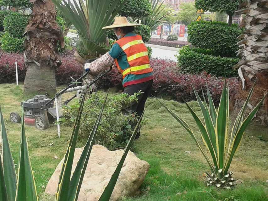 大中型土石方工程-肇慶園林樹苗找綠源景觀-品種優良
