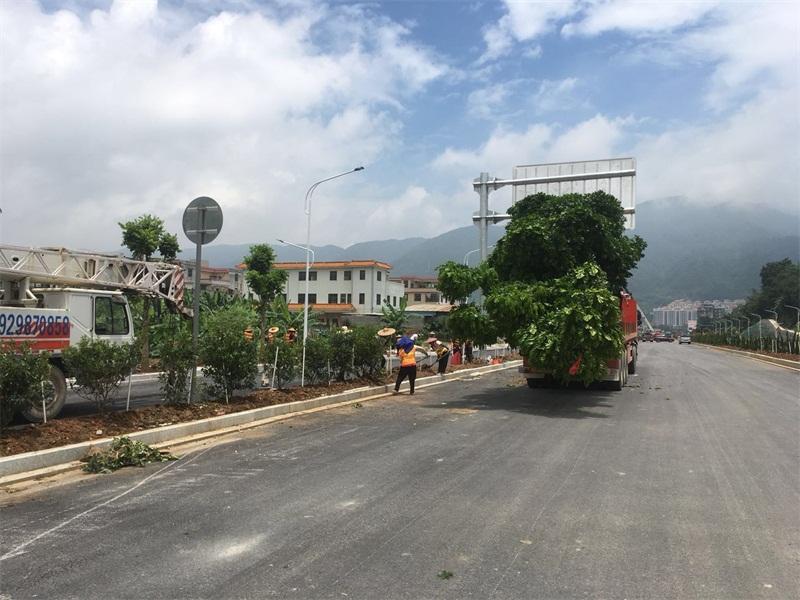 道路街道绿化工程