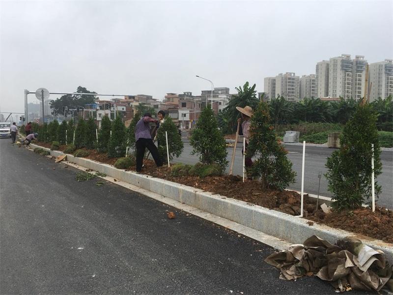 肇慶生態園林景觀設計-廣東專業的道路園林工程推薦