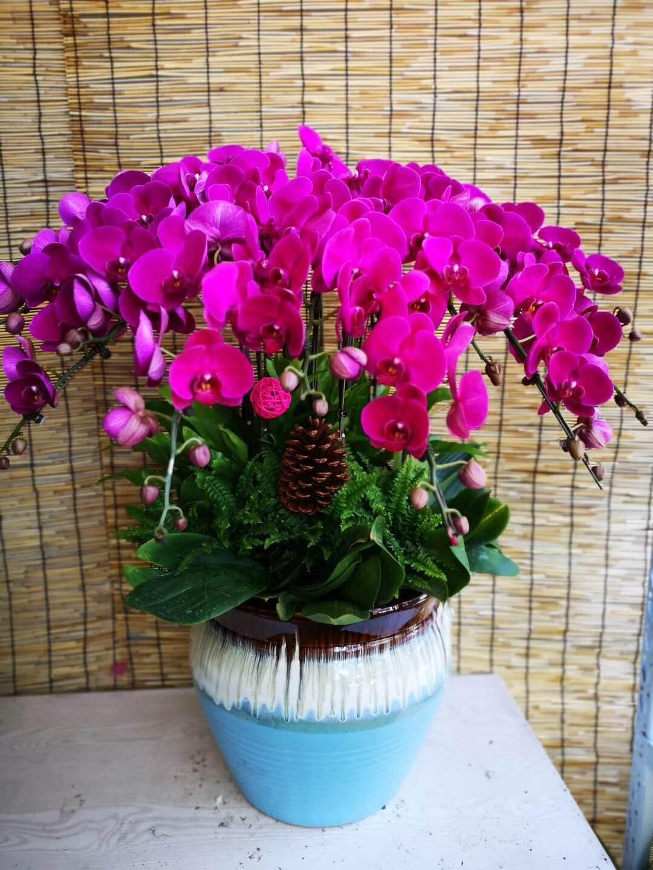 锦色花卉-杭州花卉租赁租摆,杭州花卉租摆养护,花卉租摆