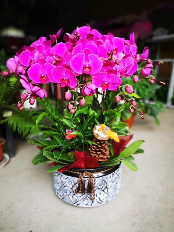 杭州大花蕙兰推荐-信誉好的绿植租赁就在锦色园艺