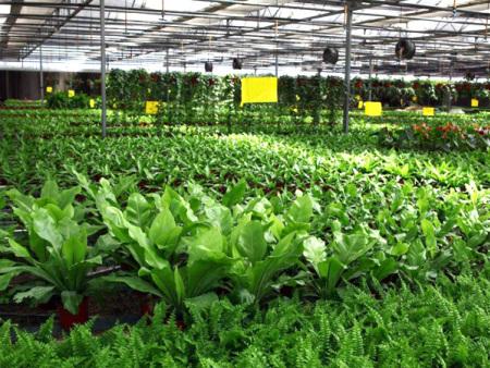 白城草莓大棚哪家好-價格實惠的草莓大棚就在遼寧新澤