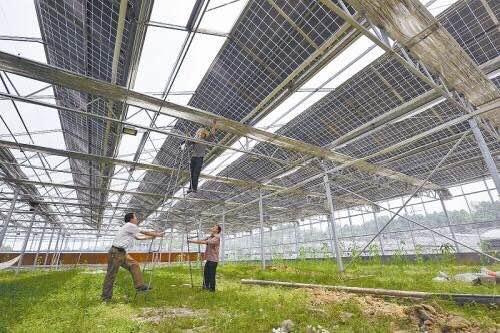 太陽能發電溫室大棚