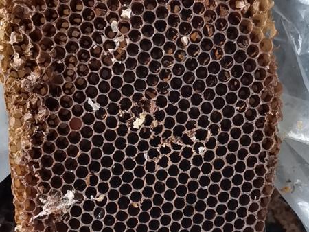 山東蜂蠟基地_口碑好的蜂蠟哪里有賣