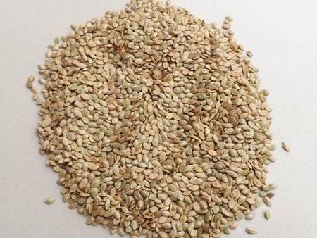 甘肃牧草种子优质品种-想买合格的西藏苗木种子,就到西藏春凯生态农牧开发
