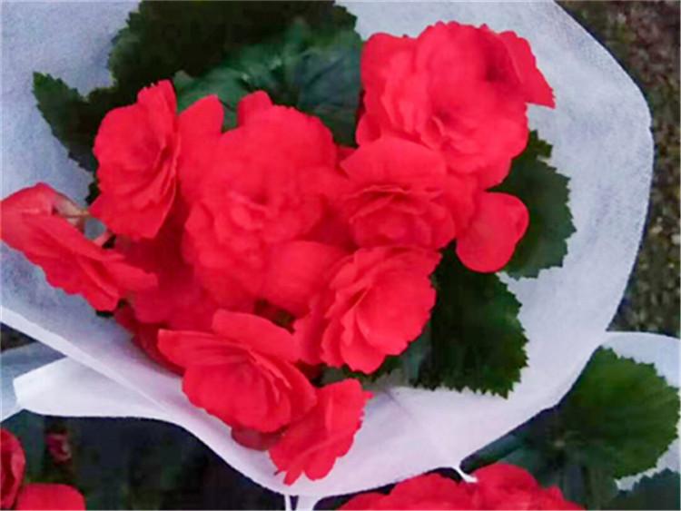 花卉塑料包装袋生产商-泰安花卉塑料包装袋-菏泽花卉塑料包装袋