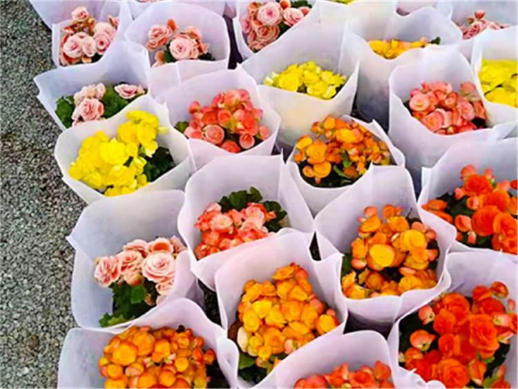 花卉塑料包装袋厂家,花卉塑料包装袋生产商,花卉塑料包装袋供应商