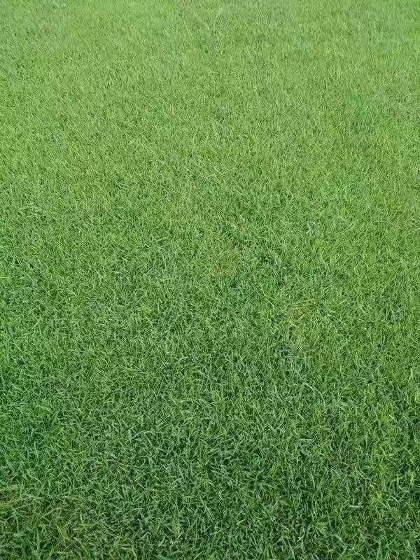 想买好的草坪就到奕臻园林景观 |焦作草坪厂家