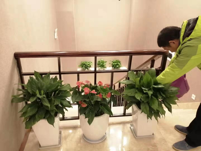 锦色园艺-杭州园林租摆公司,杭州园林公司租赁,园林公司