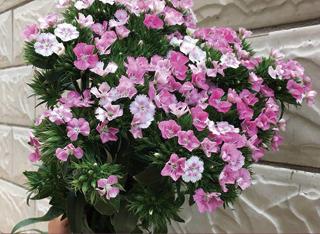 阜阳提供鲜花-阜阳口碑好的鲜花