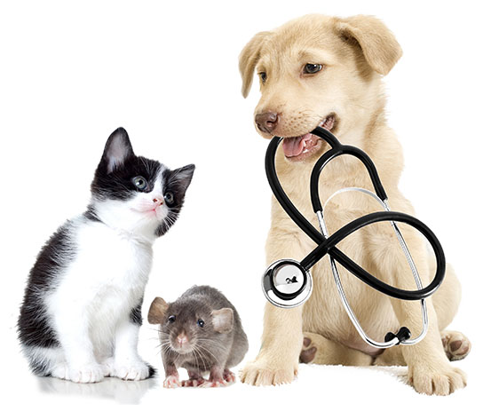 青岛宠物基础医疗课程培训