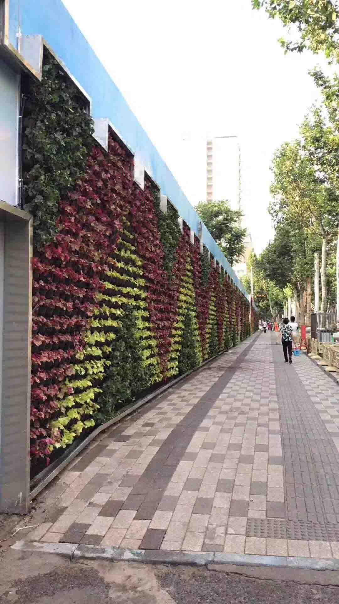 奕臻園林景觀專業供應綠植墻|綠植墻價格