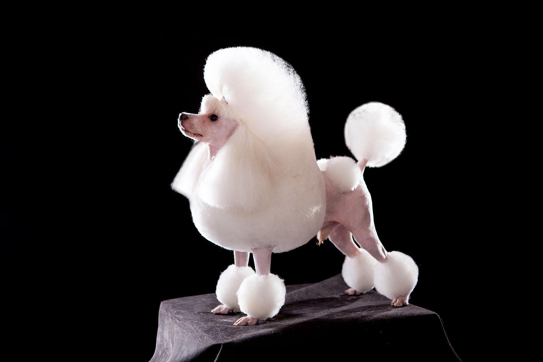 青岛宠物美容培训哪家好,宠物美容培训学校