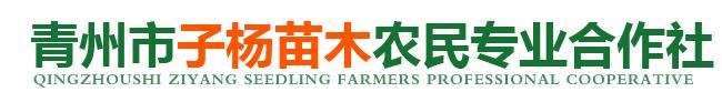 青州市子杨苗木农民专业合作社