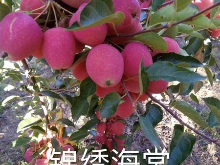 长春果树苗-松原果树苗零售_通化果树苗零售