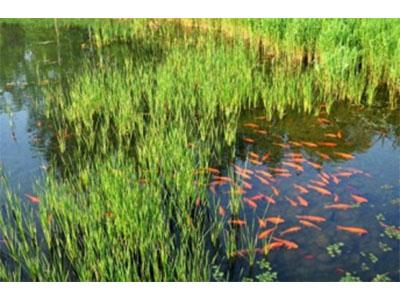 河北人工湿地-衡水哪里有供应玻璃钢化粪池