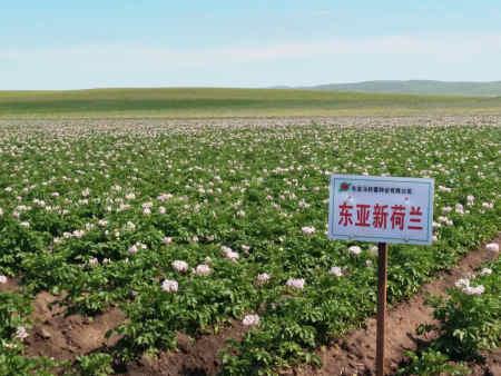 如何选择合适的沈阳草花种子