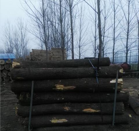 中國白楊木板材價格行情|質量好的苦楝木板材當選林茂木業