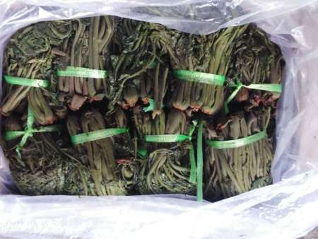 红香椿咸菜礼品盒生产价格|优良的红香椿咸菜礼品盒,俊豪红香椿供应