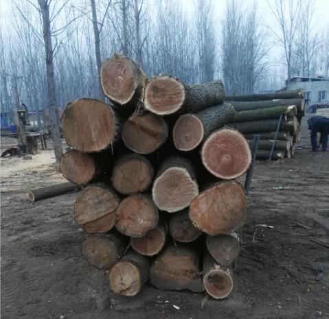 廠家直銷椿木板-大量出售優良的金秋壇木