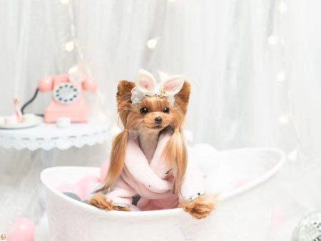 宠物美容培训b级专业班指的是什么?宠物美容培训课程