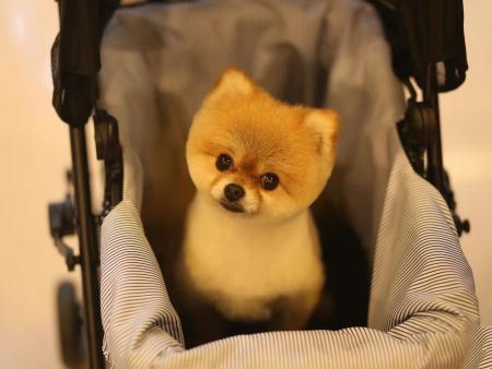 即墨宠物寄养哪里有-宠物寄养照顾宠物选哪家好