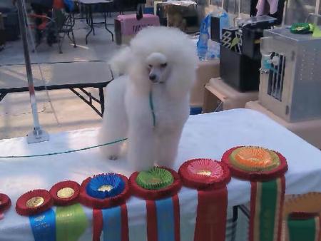 宠物美容培训课程分为哪些级别?青岛宠物美容培训