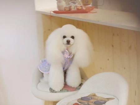 山东的宠物美容-有保障的宠物美容培训当选鑫尚