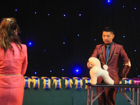 潍坊手把手教的宠物美容培训c级专业班_教学员为宠物造型费用如何
