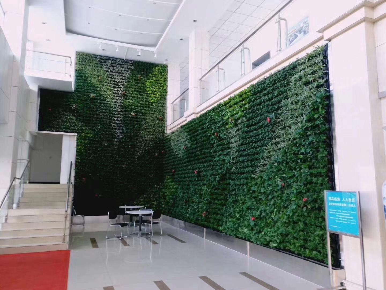 具有价值的绿植墙
