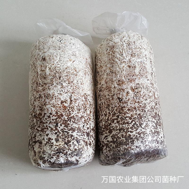 廣西搶手的廣西特產榆黃菇-想買實惠的廣西特產紫靈芝-就到廣西萬國農業集團