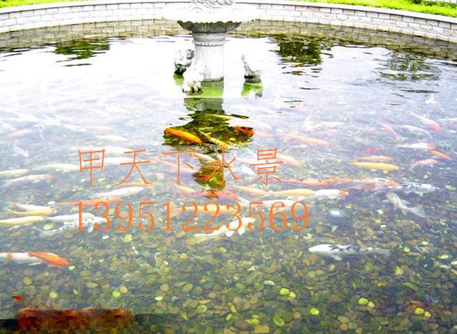 昆山市工厂企业园区景观鱼池水浑浊、水发绿处理!