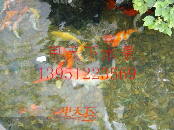 镇江市花园鱼池过滤系统设计安装。常年清澈见底!