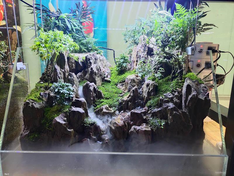水草造景價格-大量出售高性價水草造景