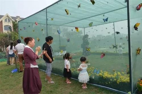 沈陽蝴蝶昆蟲標本DIY藝術展覽-葫蘆島蝴蝶展-錦州蝴蝶展