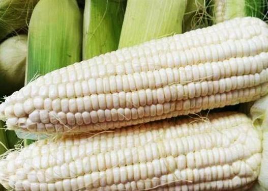 江西糯玉米种子_春小麦种子厂商批发