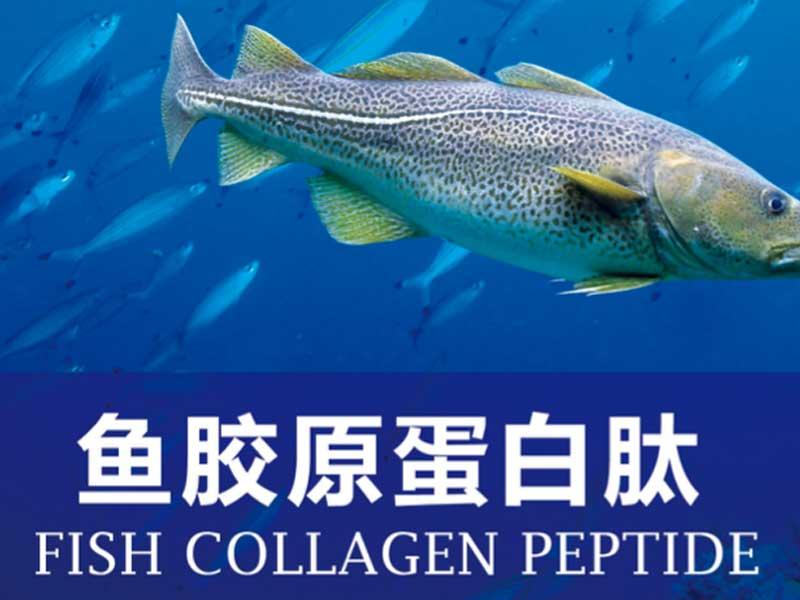 深圳鱼胶原蛋白肽oem效果怎样