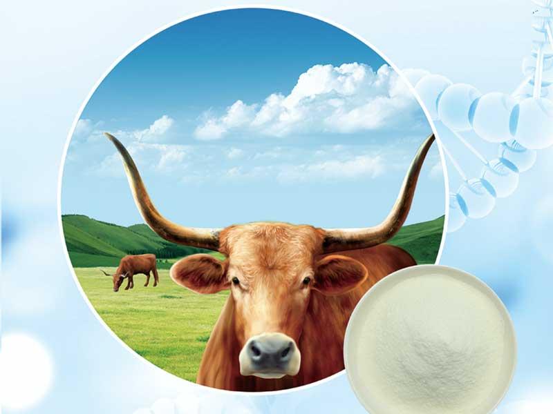 牛胶原蛋白肽厂家推荐-德州供应好用的大豆肽
