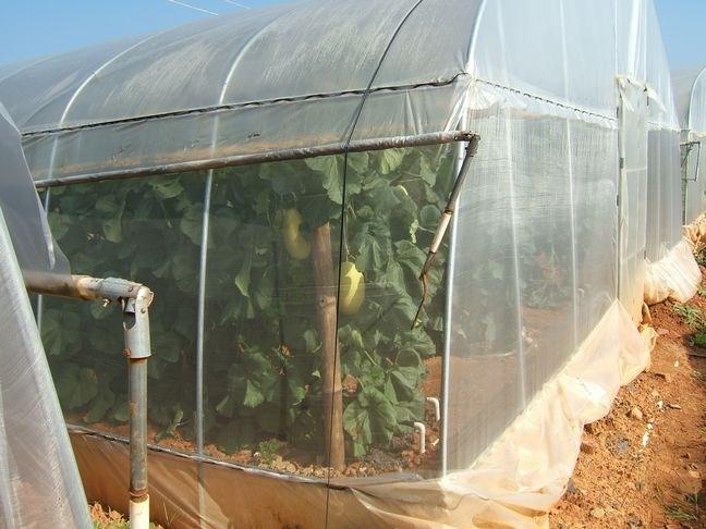 蔬菜大棚安装,南宁大棚厂家