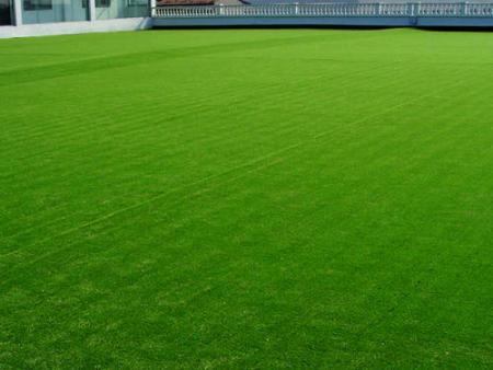 人工草皮批发-沈抚新区人工草坪-白城人工草坪