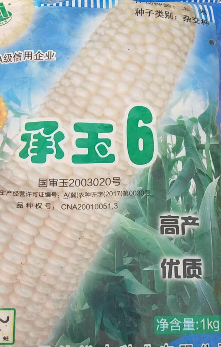河北承玉6號玉米種子-知名的承玉6號供應商
