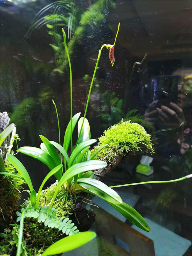 苔藓水陆植物浇水注意事项-哪里有提供优惠的兰花专用肥