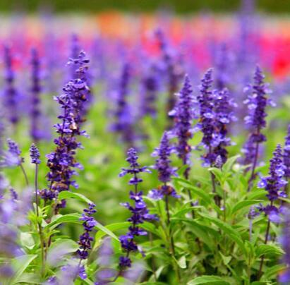 宿根花卉杯苗哪家好,宿根花卉杯苗批发商,宿根花卉杯苗供应商