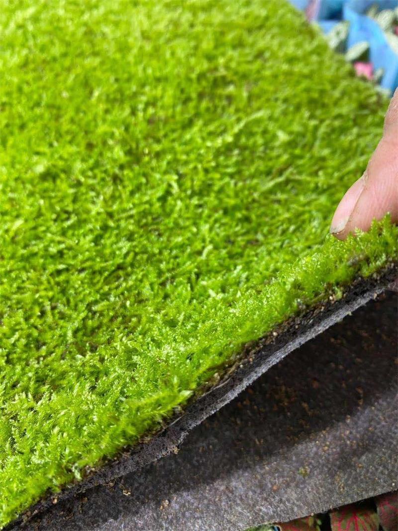 生物肥业苔藓发白什么原因-山东雨林水陆专用菌剂现货供应